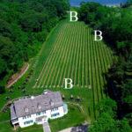 End of Row Vines (B)